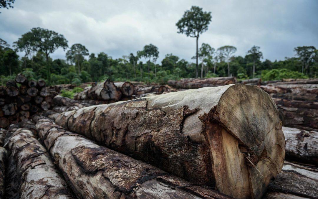 Aumento do desmatamento na Amazônia é incontestável, afirma pesquisador