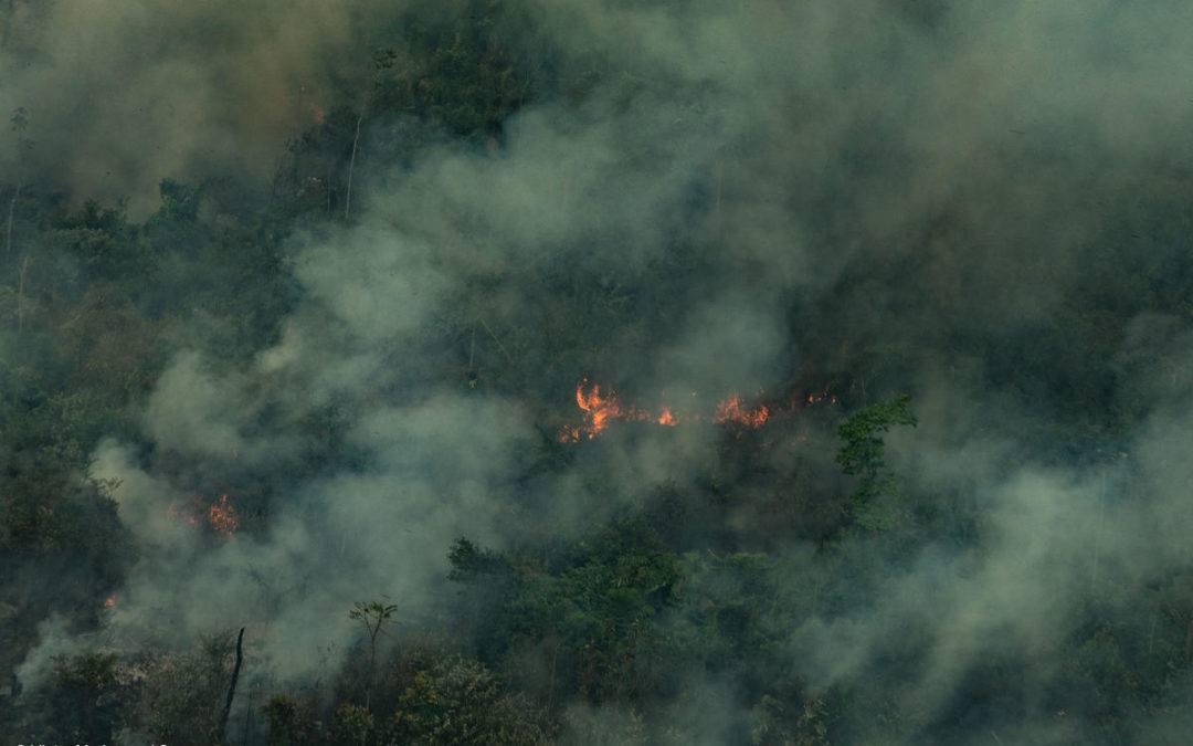 Bolsonaro pai e filho espalham Fake News na esperança que a população acredite que seu governo está sendo boicotado por ambientalistas e que Nair Brizola tem razão