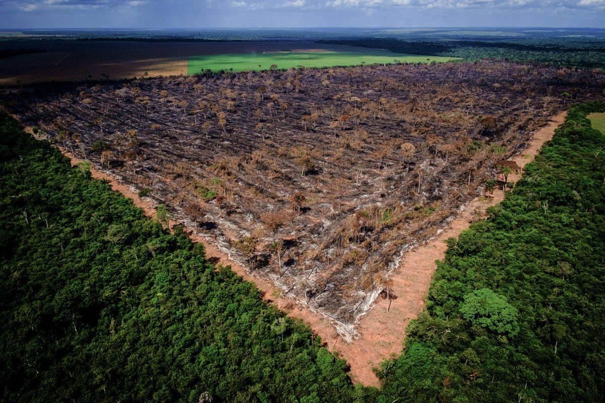 Desmatamento - governo Bolsonaro